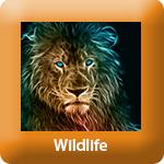 TP_Wildlife